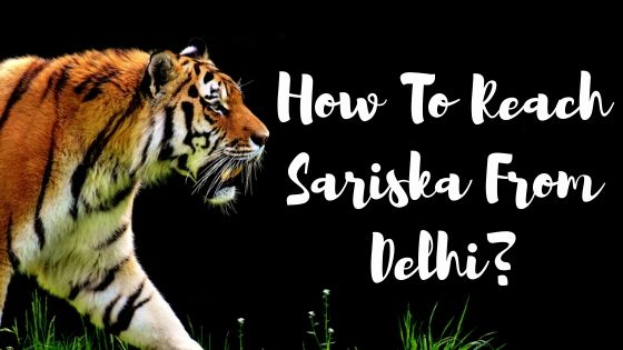 How to reach sariska from delhi