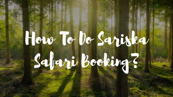 blog cover sariska